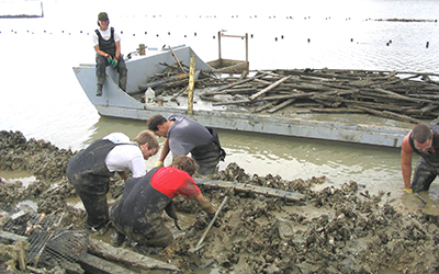 Marine farming the nasty way or the nice way