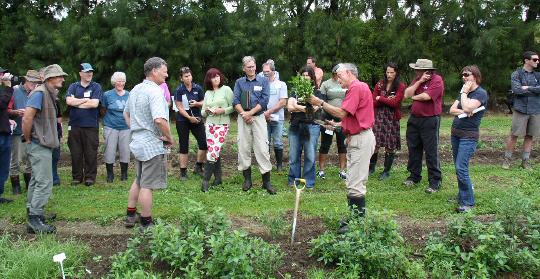 Jaap van Dorsser root pruning