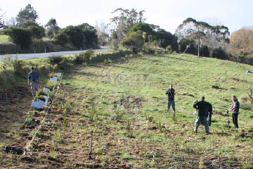Open-ground indigenous plant trials another string