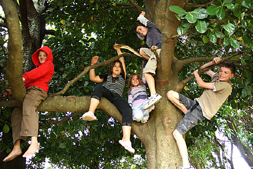Children tree-climbing, Te Horo School