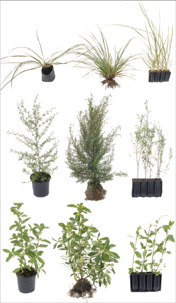 Open-ground plants measured by Tare Kaere