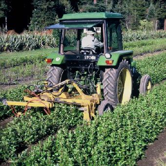 Undercutting open-ground plants