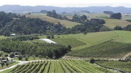 Mahurangi River vineyard