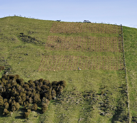 Taupo open-ground trial