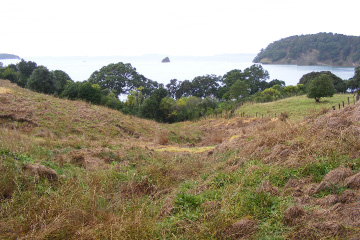 Planting day at Sullivans Bay: Badly eroded hillside behind campground