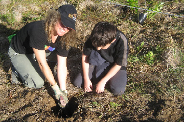 Planting day at Sullivans Bay: Think national, act local