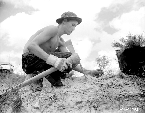 Young Civilian Conservation Corps man tree-planting
