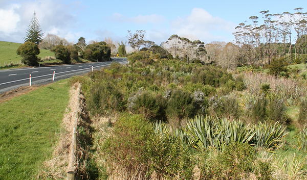 Sandspit Road open-ground indigenous species establishment trial