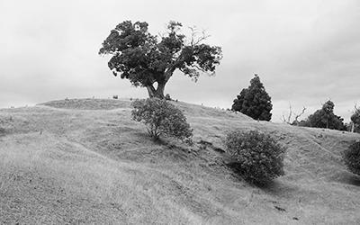 Sculptured hills and headlands of Mahurangi