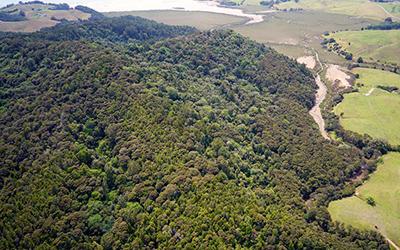 Mahurangi reserves beyond the regional parkland