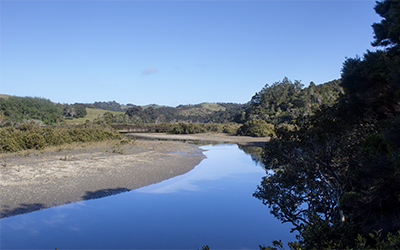 Wicked climate action starts with Wenderholm Regional Park