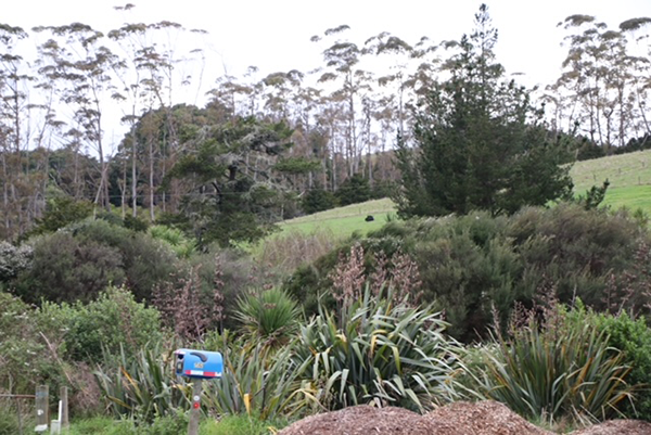 Low-cost riparian margin fencing and planting demonstration almost eclipsed by 2007 open-ground indigenous species establishment trials, 732 Sandspit Road