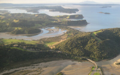 Mahurangi farm-forestry walkway will be one trail to demonstrate them all